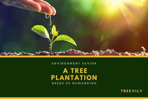 Benefits of Tree Plantation