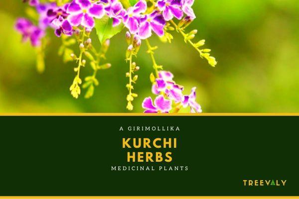 Medicinal Herbs in Bangladesh
